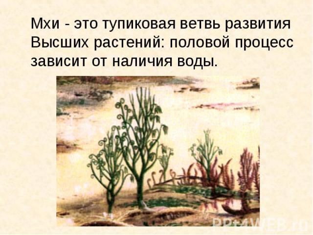 Мхи - это тупиковая ветвь развития Высших растений: половой процесс зависит от наличия воды.