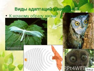 Виды адаптаций у животныхК ночному образу жизни