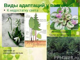 Виды адаптаций у растений К недостатку света