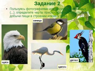 Пользуясь фотографиями или рисунками животных (,,,), определите черты приспособл