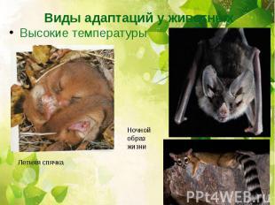 Виды адаптаций у животных Высокие температуры Ночной образ жизни