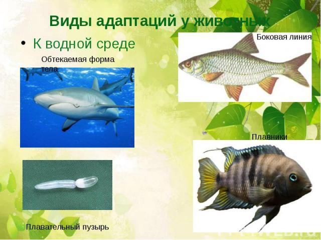 Виды адаптаций у животныхК водной среде