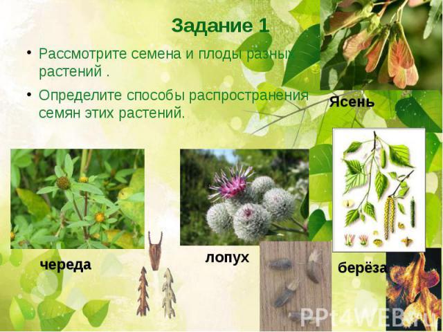 Рассмотрите семена и плоды разных растений .Определите способы распространения семян этих растений.