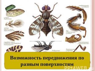 Разные органы передвижения: ходильные конечности и крылья