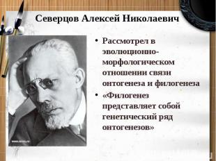 Северцов Алексей Николаевич Рассмотрел в эволюционно-морфологическом отношении с