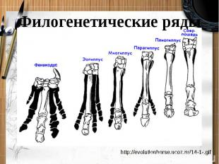 Филогенетические ряды