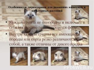 Особенности, характерные для домашних животных и культурных растений Каждая груп
