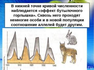 В нижней точке кривой численности наблюдается «эффект бутылочного горлышка». Скв