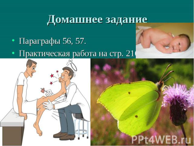 56, 57.Практическая работа на стр. 216