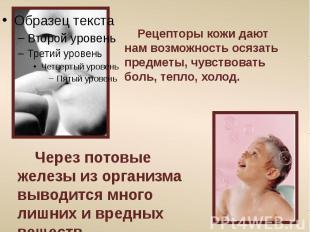 Рецепторы кожи дают нам возможность осязать предметы, чувствовать боль, тепло, х