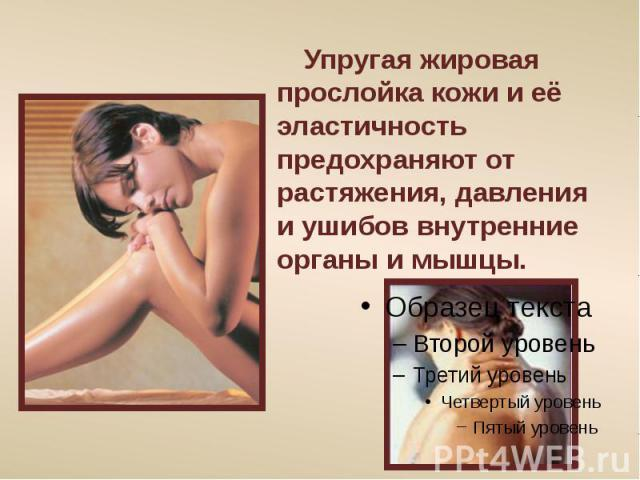 Упругая жировая прослойка кожи и её эластичность предохраняют от растяжения, давления и ушибов внутренние органы и мышцы.
