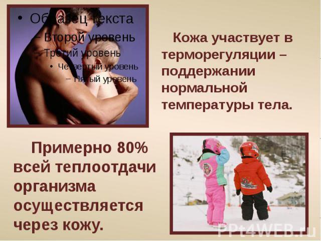 Кожа участвует в терморегуляции – поддержании нормальной температуры тела. Примерно 80% всей теплоотдачи организма осуществляется через кожу.