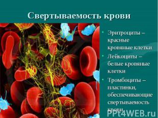 Свертываемость крови Эритроциты –красные кровяные клеткиЛейкоциты – белые кровян