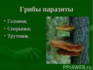 Грибы паразиты Головня;Спорынья;Трутовик.