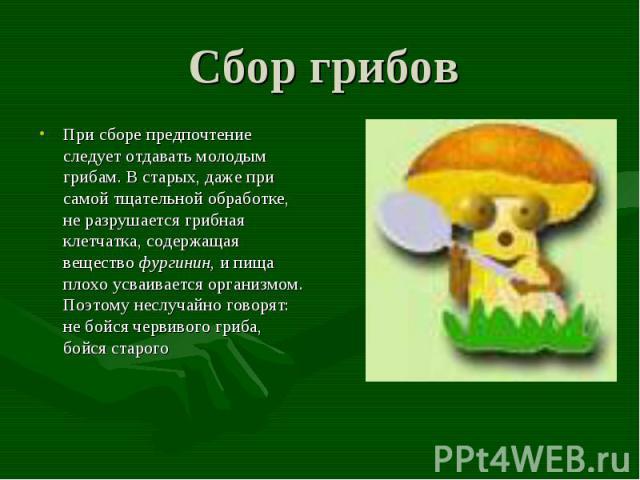 Сбор грибов При сборе предпочтение следует отдавать молодым грибам. В старых, даже при самой тщательной обработке, не разрушается грибная клетчатка, содержащая вещество фургинин, и пища плохо усваивается организмом. Поэтому неслучайно говорят: не бо…