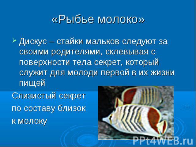 «Рыбье молоко» Дискус – стайки мальков следуют за своими родителями, склевывая с поверхности тела секрет, который служит для молоди первой в их жизни пищейСлизистый секретпо составу близокк молоку