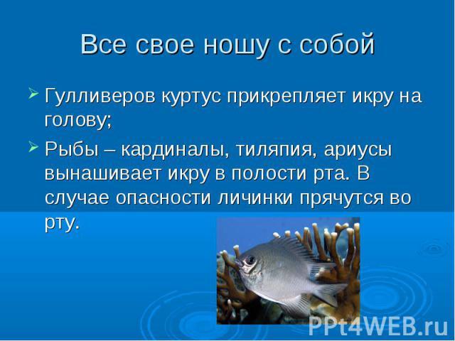 Все свое ношу с собой Гулливеров куртус прикрепляет икру на голову;Рыбы – кардиналы, тиляпия, ариусы вынашивает икру в полости рта. В случае опасности личинки прячутся во рту.