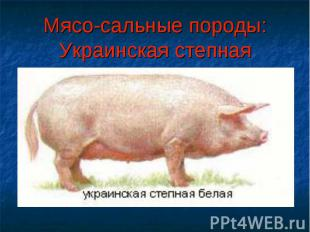 Мясо-сальные породы:Украинская степная