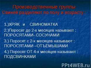 Производственные группыСвиней разделяют по полу и возрасту : 1.)ХРЯК и СВИНОМАТК