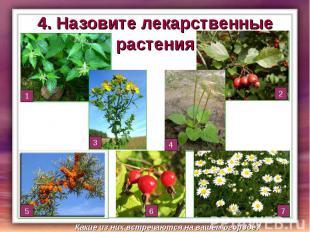 4. Назовите лекарственные растения