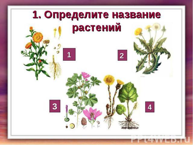 1. Определите название растений