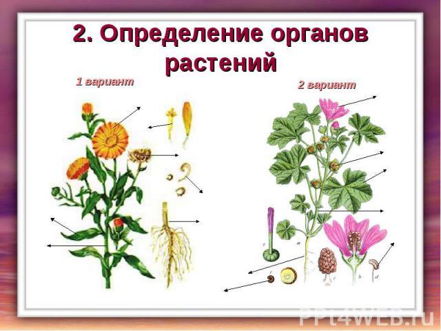 2. Определение органов растений