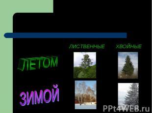 Деревья ЛЕТОМ ЗИМОЙ ЛИСТВЕННЫЕ ХВОЙНЫЕ