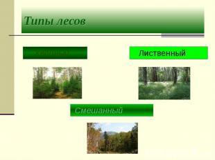 Типы лесов Хвойный Лиственный Смешанный