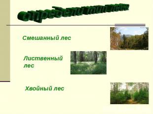 определи тип леса Смешанный лес Лиственный лес Хвойный лес