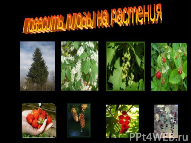 Повесить плоды на растения