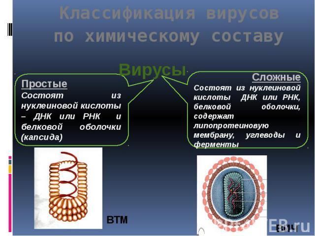 Классификация вирусов по химическому составу Вирусы ПростыеСостоят из нуклеиновой кислоты – ДНК или РНК и белковой оболочки (капсида) СложныеСостоят из нуклеиновой кислоты ДНК или РНК, белковой оболочки, содержат липопротеиновую мембрану, углеводы и…