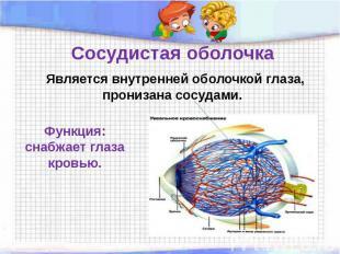 Сосудистая оболочка Является внутренней оболочкой глаза, пронизана сосудами. Фун
