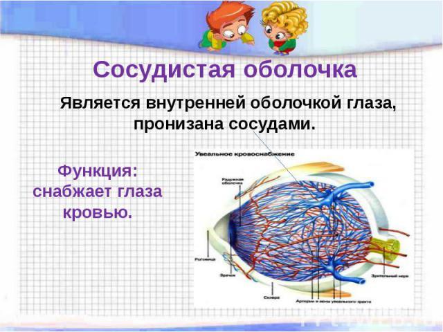 Сосудистая оболочка Является внутренней оболочкой глаза, пронизана сосудами. Функция: снабжает глаза кровью.