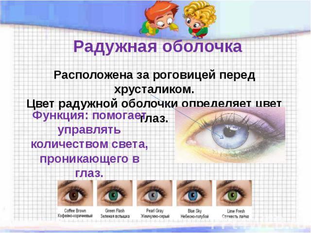 Радужная оболочка Расположена за роговицей перед хрусталиком.Цвет радужной оболочки определяет цвет глаз. Функция: помогает управлять количеством света, проникающего в глаз.