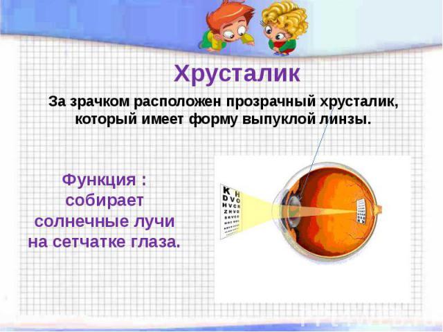 За зрачком расположен прозрачный хрусталик, который имеет форму выпуклой линзы. Функция : собирает солнечные лучи на сетчатке глаза.