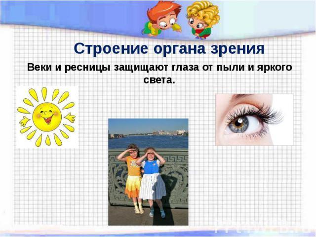 Строение органа зрения Веки и ресницы защищают глаза от пыли и яркогосвета.