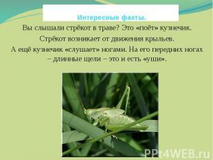 Интересные факты. Вы слышали стрёкот в траве? Это «поёт» кузнечик.Стрёкот возник
