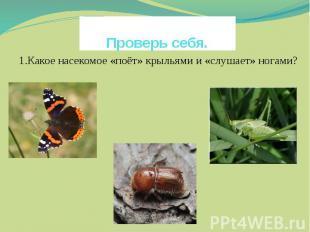 Проверь себя. 1.Какое насекомое «поёт» крыльями и «слушает» ногами?