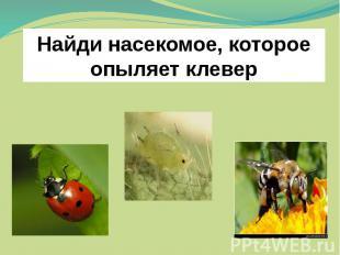 Найди насекомое, которое опыляет клевер Проверь себя.