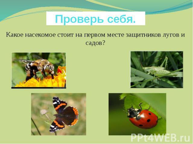 Проверь себя. Какое насекомое стоит на первом месте защитников лугов и садов?