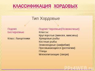 Классификация хордовых Тип Хордовые Подтип БесчерепныеКласс Ланцетники Подтип Че