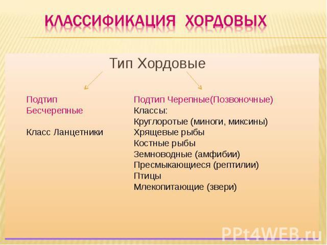 Классификация хордовых Тип Хордовые Подтип БесчерепныеКласс Ланцетники Подтип Черепные(Позвоночные)Классы:Круглоротые (миноги, миксины)Хрящевые рыбыКостные рыбыЗемноводные (амфибии)Пресмыкающиеся (рептилии)ПтицыМлекопитающие (звери)