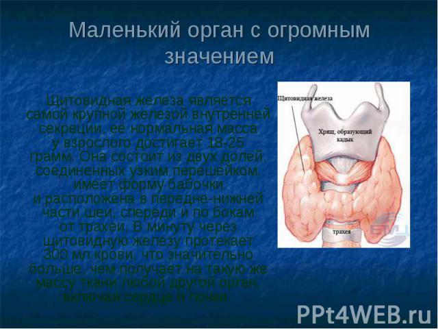 Маленький орган с огромным значением Щитовидная железа является самой крупной железой внутренней секреции, еёнормальная масса увзрослого достигает18-25 грамм.Она состоит издвух долей, соединенных узким перешейком, имеет форму бабочки ирасполож…