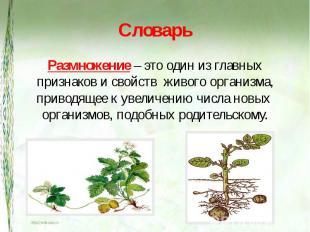 Словарь Размножение – это один из главных признаков и свойств живого организма,