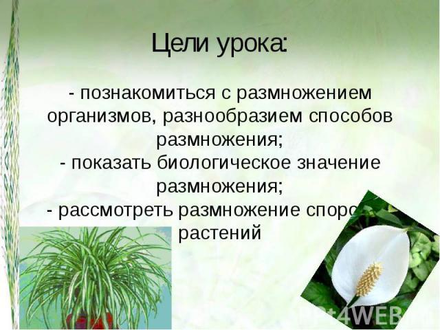 Цели урока: - познакомиться с размножением организмов, разнообразием способов размножения;- показать биологическое значение размножения;- рассмотреть размножение споровых растений