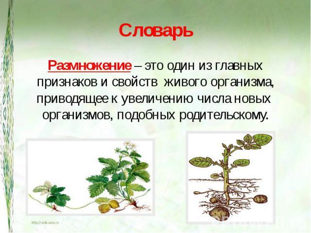 Словарь Размножение – это один из главных признаков и свойств живого организма, приводящее к увеличению числа новых организмов, подобных родительскому.