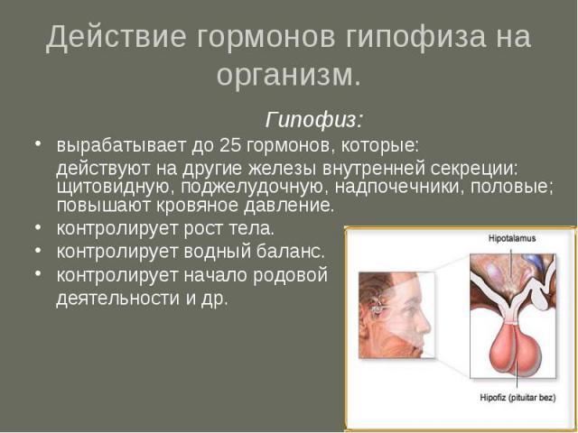 Действие гормонов гипофиза на организм. Гипофиз:вырабатывает до 25 гормонов, которые: действуют на другие железы внутренней секреции: щитовидную, поджелудочную, надпочечники, половые; повышают кровяное давление.контролирует рост тела.контролирует во…