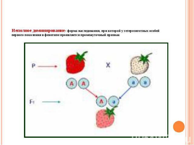 Неполное доминирование- форма наследования, при которой у гетерозиготных особей первого поколения в фенотипе проявляется промежуточный признак
