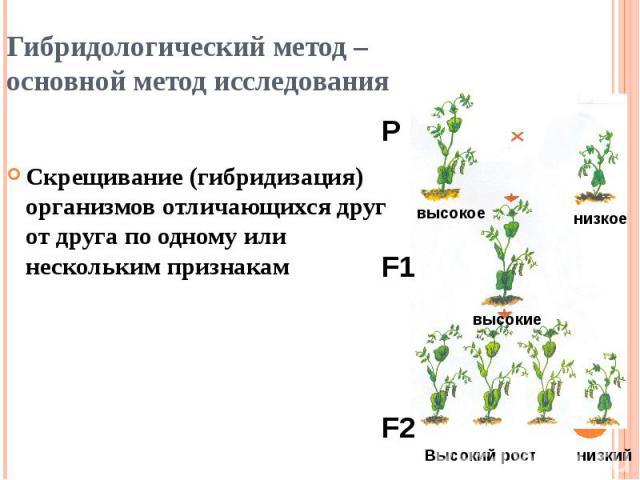 Гибридологический метод – основной метод исследования Скрещивание (гибридизация) организмов отличающихся друг от друга по одному или нескольким признакам