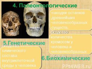 4. Палеонтологические находки останков древнейших человекообразных существ. сход
